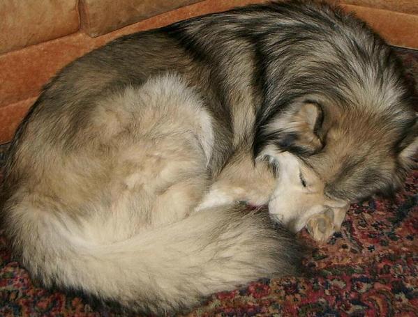 puppy-pose